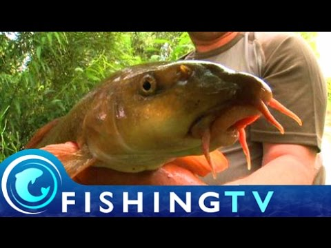 Club Class 2: Barbel Society - Fishing TV