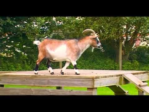 Warren Farm Holiday Centre Video - 2011