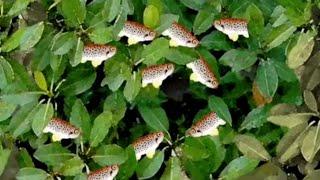"""Мультфильм детям """"Какие рыбы могут жить на деревьях?"""" /Формула УМА - видеоуроки для школьников"""