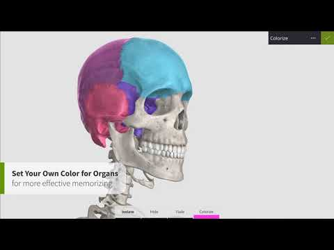 Anatomyka Skeleton  for PC - Download And Install - (Windows And Mac)