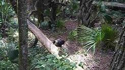 RARE BIRD Cocoa Beach Brevard Zoo FL FLORIDA USA