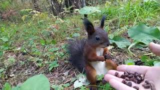 Белочка сломалась/Squirrel broke/そして、リスは本当に壊れました。