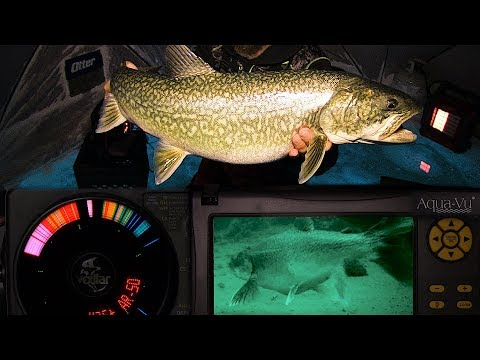 Smacking Lake Trout - Tricks & Toys - Northern Manitoba