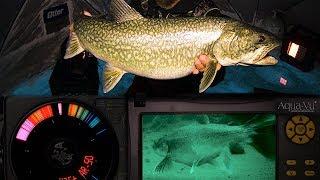 Smacking Lake Trout - Tricks & Toys - Northern Manitoba