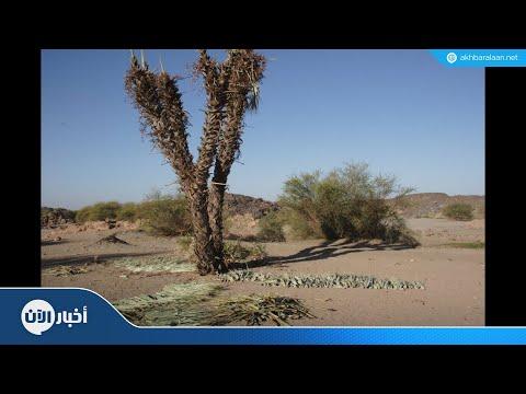 باحث عراقي: تدخلات إيران دمرت الصناعة والزراعة العراقية  - نشر قبل 2 ساعة