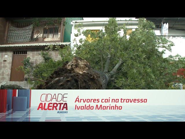 Árvores cai na travessa Ivaldo Marinho nas Piabas