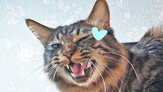 애교많은 고양이랑 살면 생기는일