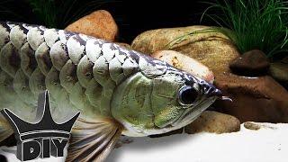 Fish updates, aquarium builds and bad news