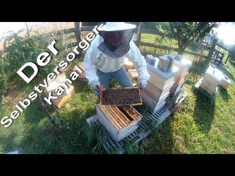 Wabenhygiene bei Bienenvölkern