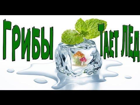 ГРИБЫ - Тает лед! ТОП ПАРОДИИ на песню между нами тает лед