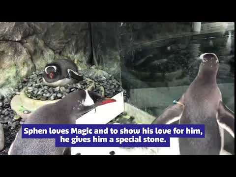 The Woody Show - Gay Penguin Couple Are Given Egg to Raise