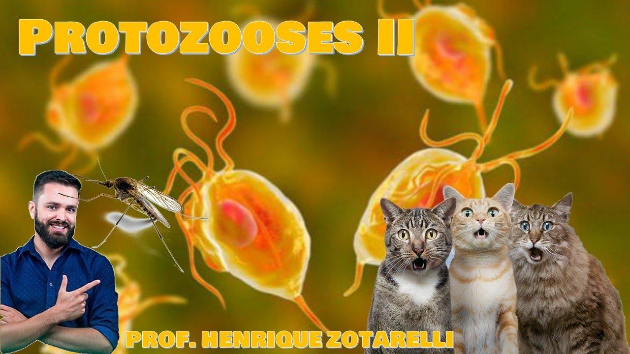 Féreglyuk a giardia esetében emberekben, Parazitakezelés Litvániában A paraziták szóda
