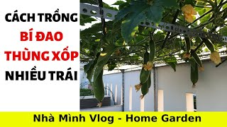 How to make soil - grow Winter melon with lots of fruit