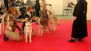 Выставка собак 24.04.2011 Нижегородская Ярмарка, Хаски 2