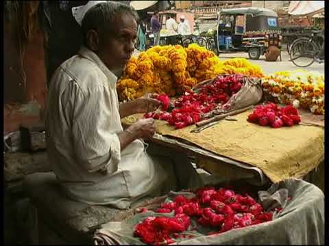Reisen in Indien - Life in Jaipur, India - WDYWBATM