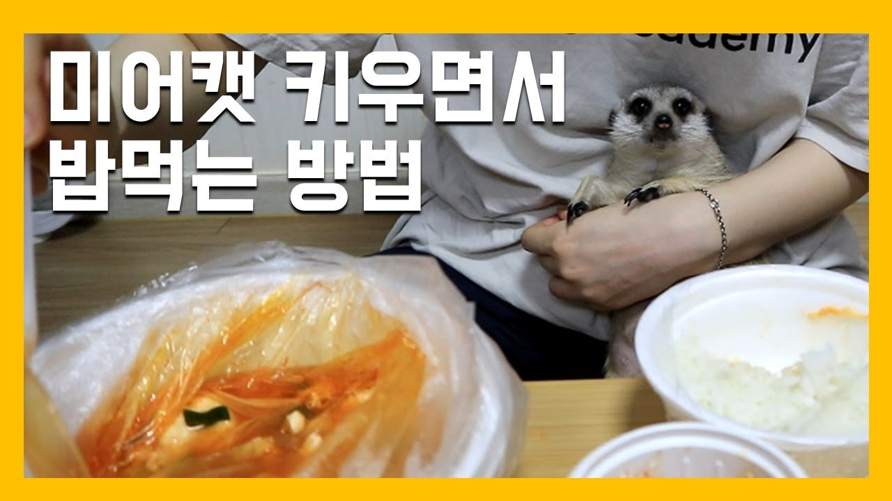 미어캣 키우면서 밥먹는 방법 [냥이아빠]