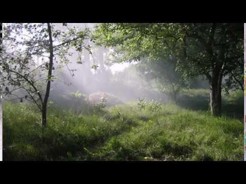 Клип Аида Ведищева - Старый сад