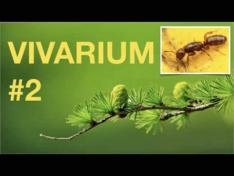 SALAMANDERS and PARASITIC Ants Vivarium update! Second episode.