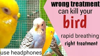 Save birds from wrong treatment/ treatment of rapid breathing
