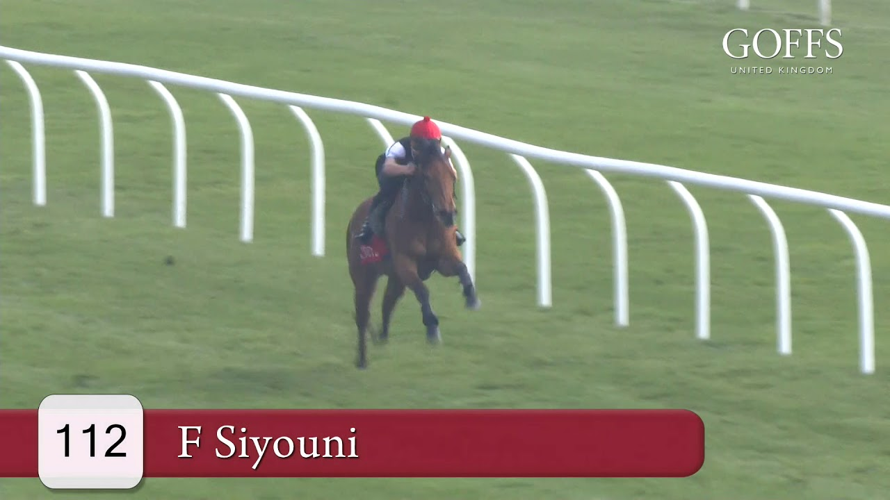 Siyouni filly on top at Goffs UK