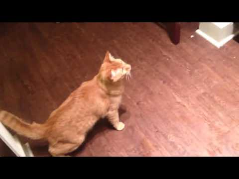 Funny cat video – funny cat videos download hd