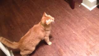 Funny cat video - funny cat videos download hd