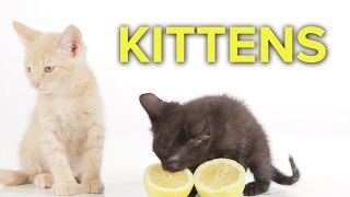 Kittens Do Stuff For The First Time