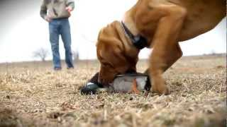 D.T. the Dog Training Video 1 | Choosing the Right Dog