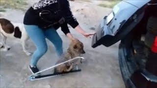 Она ждала помощи и дождалась  Спасение собаки