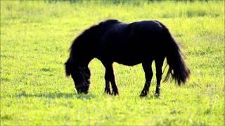 Pferd und Ponny - Aufnahme mit Nikon D7000