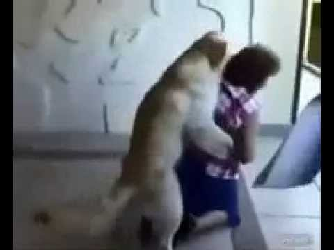 Boy dog meets Girl Dog from YouTube · Duration:  1 minutes 50 seconds