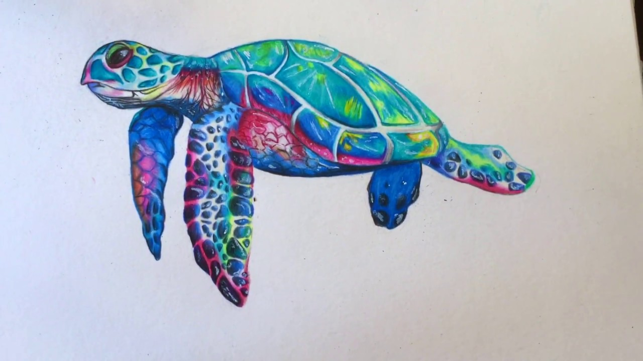Drawing A Sea Turtle // EvaLinee - YouTube