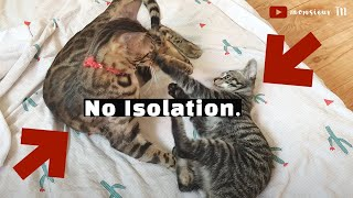 Cat Introductions: The No Separation Method (Fastest!)