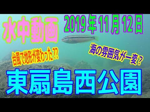 水中動画(2019年11月12日)in東扇島西公園