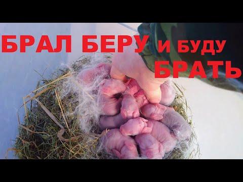 Крольчата когда можно брать в руки и можно трогать маленьких крольчат голыми руками