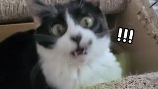 장난감 볼 때 고양이의 동공 변화, 커졌다가 작아졌다 …