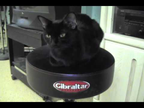 THIS COOL CAT DIGS GIBRALTAR HARDWARE
