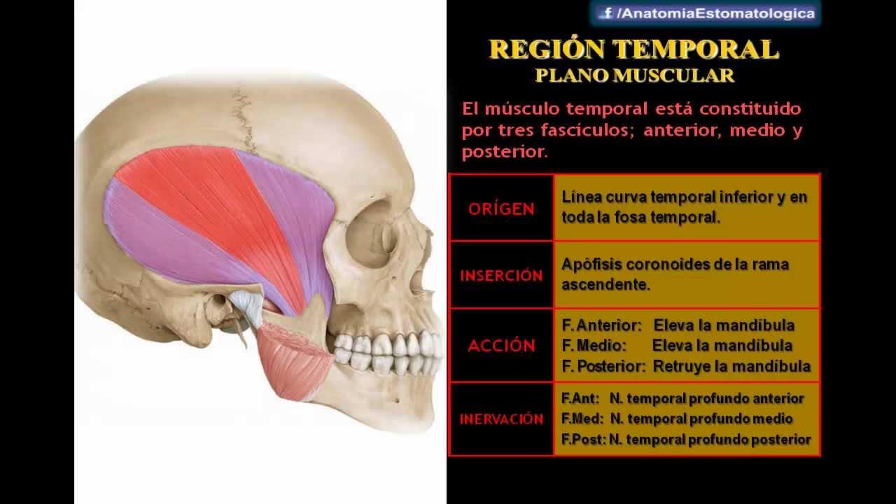 Drs. Abad & Matos - Región Masticadora Superficial Y ATM - YouTube
