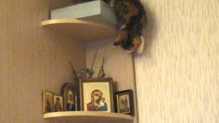 Смешное Видео с Кошкой)) Кошка тянется за вербой и ... падает.