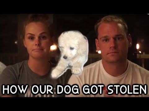 HOW OUR DOG GOT STOLEN thumbnail