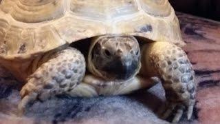 Уход за сухопутной черепахой. Травка для Пышки (сухопутной черепахи).