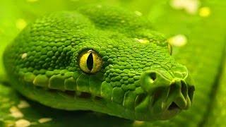 Wild Snake in 4K Ultra HD - Дикие Змеи в 4К