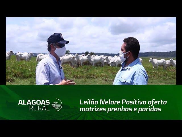 Leilão Nelore Positivo oferta matrizes prenhas e paridas