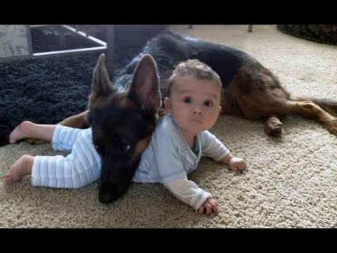 Big Dogs That Are Good With Babies