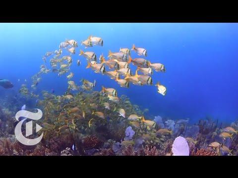 Cuba's Coral Garden: Jardines de la Reina | The New York Times