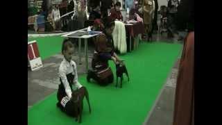 Выставка Собак 2012 в Киеве(ринг цвергпинчеры)