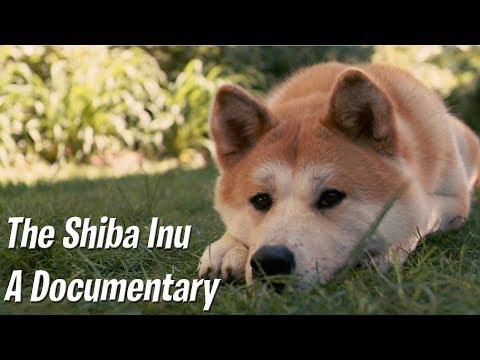 The Shiba Inu - A documentary