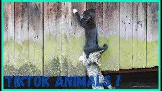 ЛУЧШИЕ ЖИВОТНЫЕ ВИДЕО НЕДЕЛИ Забавные и милые животные