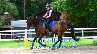 Pferd steigt, klebt und geht nicht vom Hof - Gelassenheitstraining für Pferde kann helfen