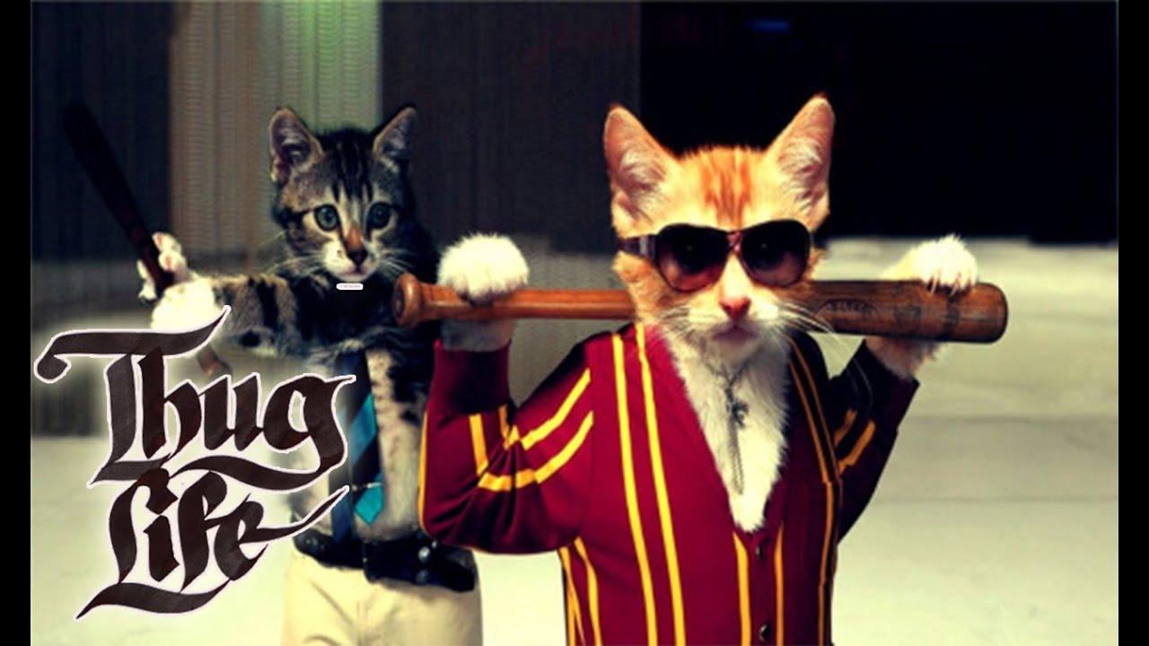 GATOS Thug Life 2016. Los vídeos más chistosos de gatos. Los más divertidos! , YouTube